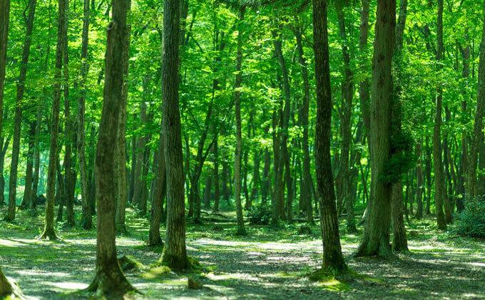 奥久慈憩いの森